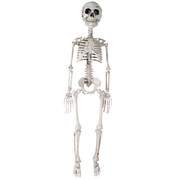 76cm Plastic Skeleton Decoration Pk 1
